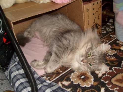 Кошка сама найдет теплое место