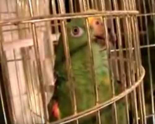 Попугаю тоже нужно тепло