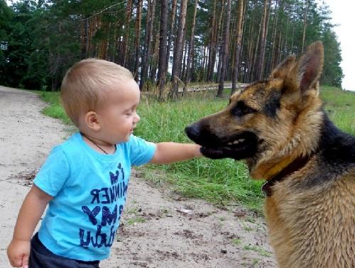 Собаки няньки