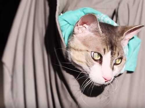 Кошка в сумке-переноске