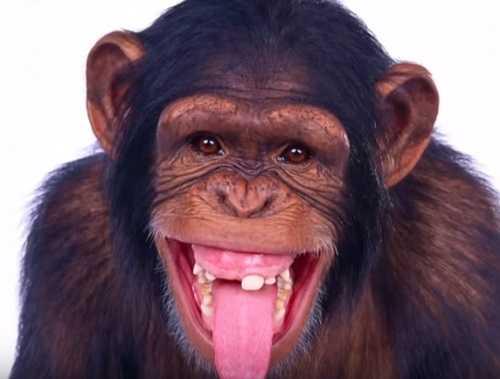 Буйные обезьяны