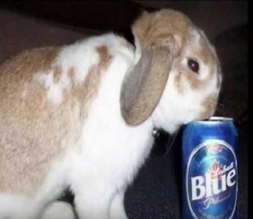 Алкоголь и животные