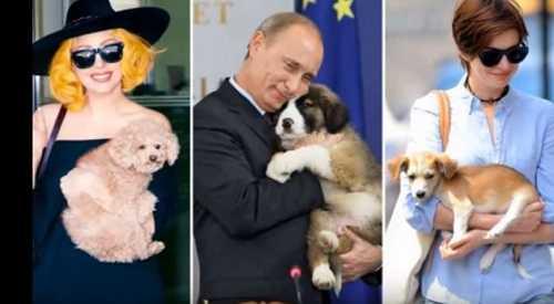 Животные знаменитостей