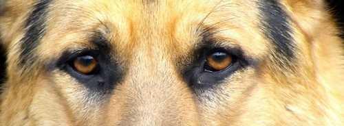 Рассказ про собаку