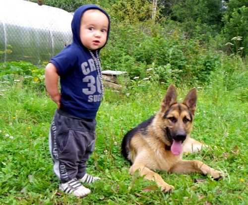 Вовка и Муха