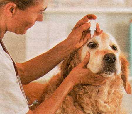 Первая помощь животным