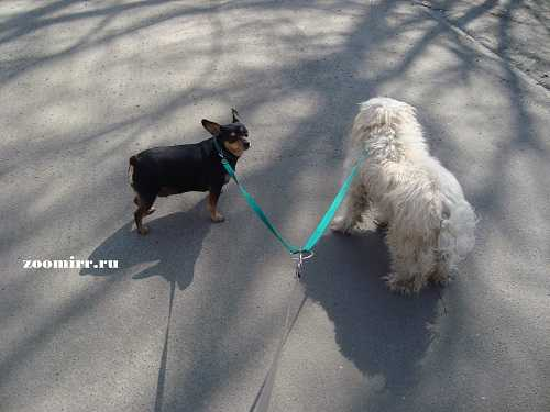 На прогулке