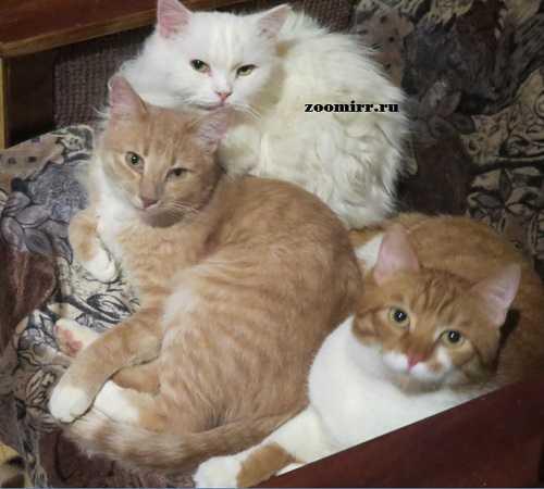 Полезная информация о кошках