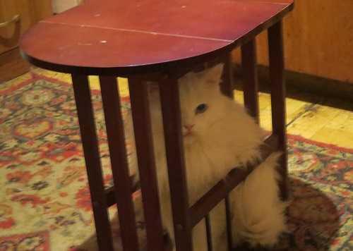Кошка-гость из другого мира