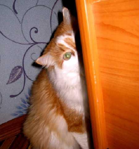 Поведение котов