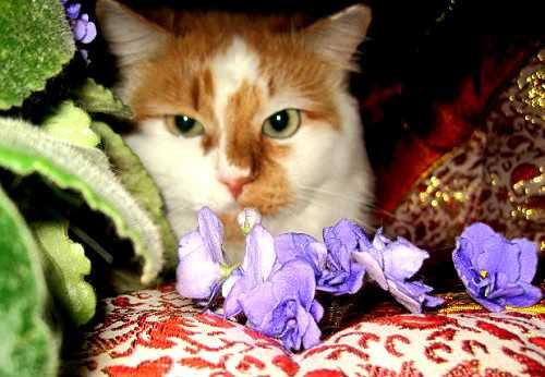 Кот интроверт