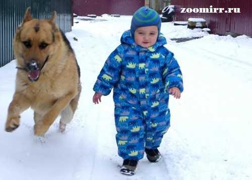 Собаки-няньки