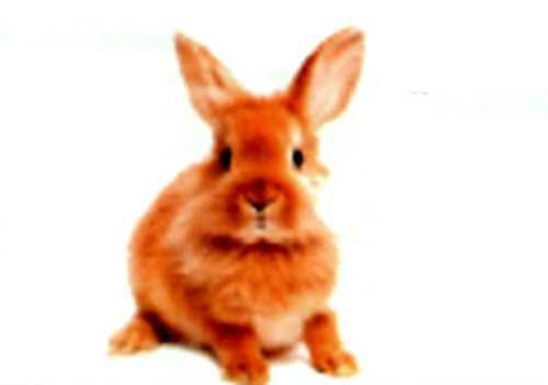 Необычный кролик