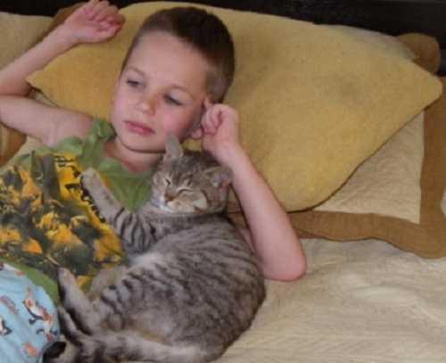 Как кошки проявляют любовь