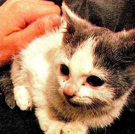 История про кошку Маруську