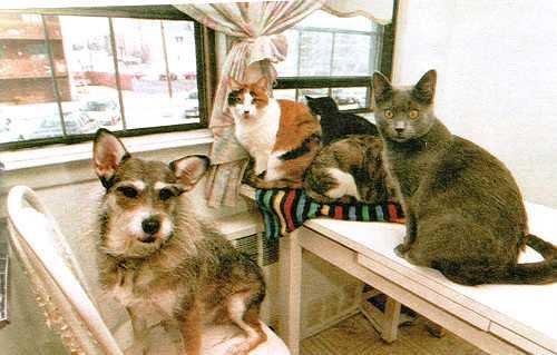 Как собака кошек спасала