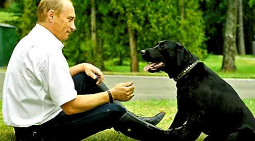 Конни-собака Путина