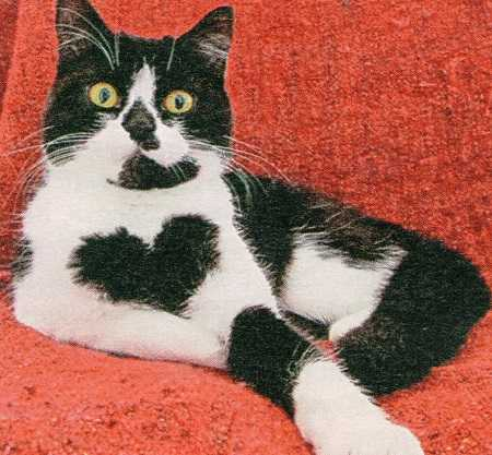 Кошка Зоя и два сердца