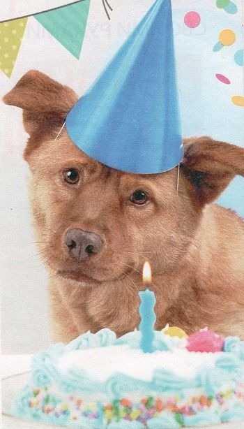 День рождения питомца