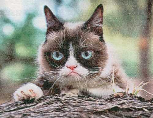 Кот Тартар