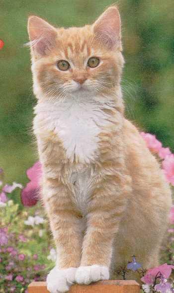 Добрая история про кошку Мотю