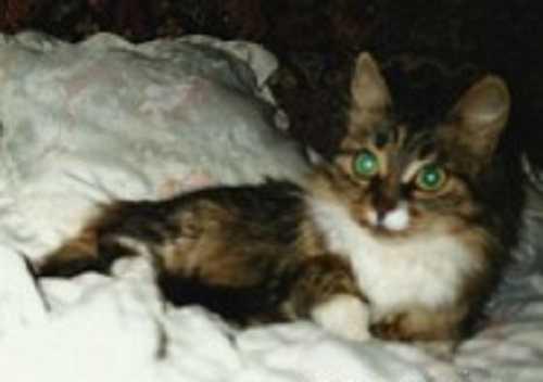 Кошка Муська