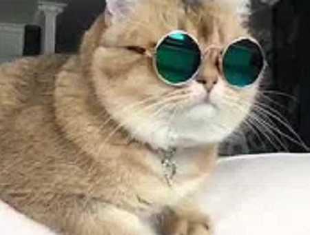Умные породы кошек