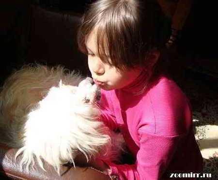 Любите своих животных
