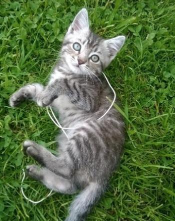 У вас появился котенок