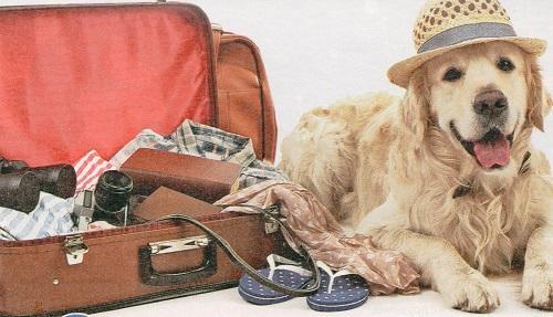 С кем оставить собаку в отпуске
