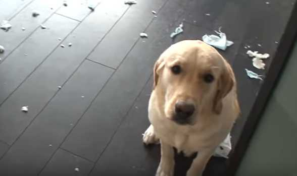 Как перевоспитать собаку