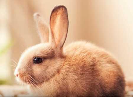 Зачем кролику большие уши