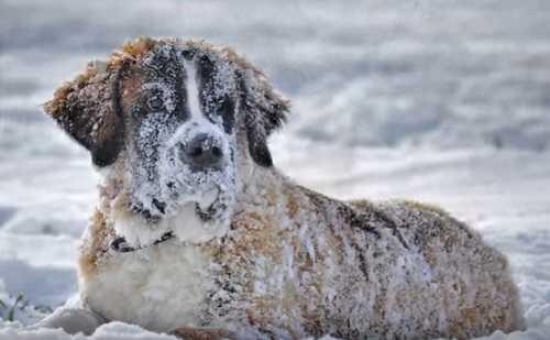 """Почему холод """"собачий"""""""