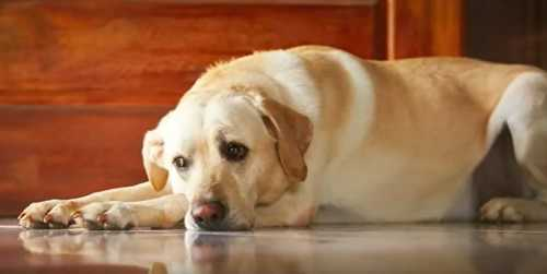 Депрессия у собак