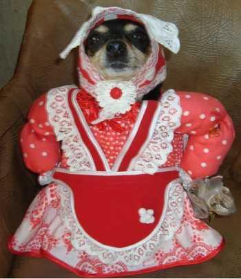 Смешной костюм для собаки