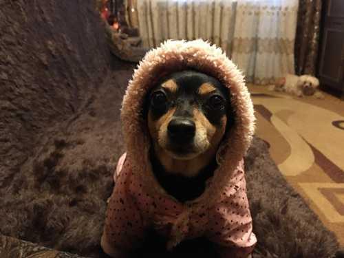 Нужна-ли собаке одежда?