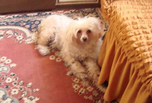 Рак легких у моей собаки